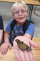 SchmetterlingsfarmMausklasse